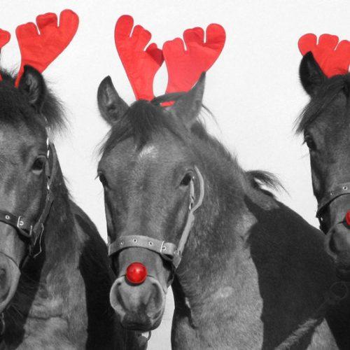 horses_bwr